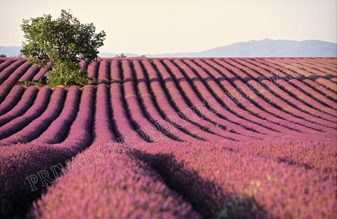 Luxury Villa Holiday Rentals in Provence - Luberon, France